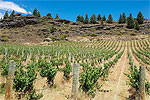 ROARING WINE TOURS - Central Otago